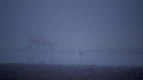 Heron and deer in the fog Royalty Free Stock Photos