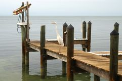 Heron on dock Royalty Free Stock Photos