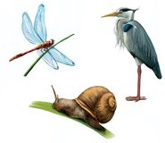 Grey Heron, dragon fly, and snail. Heron, dragon fly, snail. Isolated illustration white background Stock Image