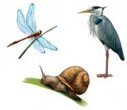 Grå färgHeron, drakefluga och snail Fotografering för Bildbyråer