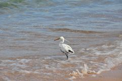 White heron Royalty Free Stock Photos