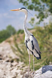 Heron enjoying the sunny day royalty free stock photos