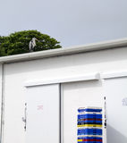 Heron on Fish Warehouse roof. Stock Images