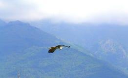 Heron in flight Stock Photos