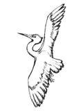 Heron in flight Royalty Free Stock Photos
