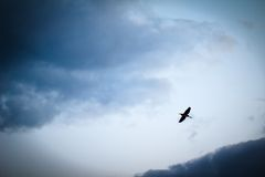 Heron flying on a cloudy sky Stock Photo
