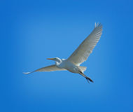 Heron Flying High Stock Photo