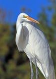Heron Stock Photography