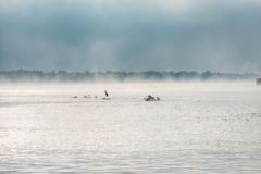 Heron and gulls on a misty lake. Stock Images