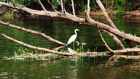 Heron hunts on the river Stock Photo