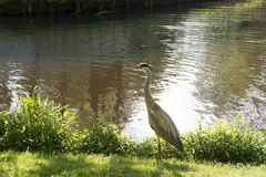 Free Heron In An Amsterdam Park. Netherlands Holland Stock Photo - 119630360