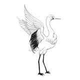 Heron isolated over white. Stock Photo