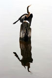 Heron and its reflection in the water. Royalty Free Stock Photo