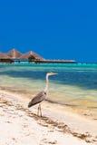 Heron on Maldives beach stock photo