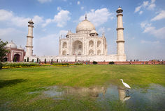 Heron near Taj Mahal Stock Images