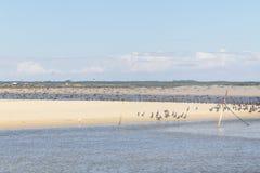 Heron and Neotropic Cormorants on the beach Stock Photography