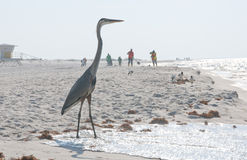 Heron on oil threatened beach