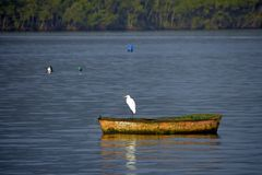 Free Heron On Boat, In Calm Waters Of The Sea Stock Photography - 125563072