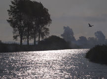 Heron over Norfolk Broads. River Yare at dawn Royalty Free Stock Image