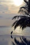 Heron over the swiming pool. Heron over infinity pool in Maldives Stock Photo