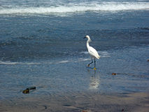 Heron på stranden royaltyfri fotografi