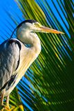 Heron Stock Photography