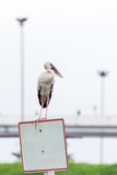 Heron perched on blank street sign Royalty Free Stock Photos