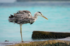 Heron. Perfect nature. stock image