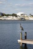 Heron on the pier Stock Photos