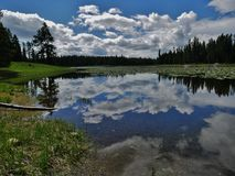 Heron Pond, Grand Teton National Park, Wyoming. Midday cloud reflection with lilies on Heron Pond in Grand Teton National Park, Wyoming royalty free stock image