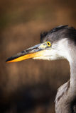 Heron portrait in a profile. Royalty Free Stock Photos