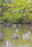 Heron posing on the pond at Maruyama Park, Kyoto, Japan. A heron posing on a stone above the pond at Maruyama Park (Maruyama Koen) Higashiyama district in Kyoto Royalty Free Stock Image