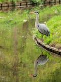 Heron reflection Royalty Free Stock Photography