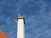 Heron resting. A grey heron resting on a white chimney Stock Images