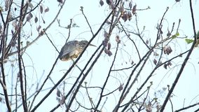 Heron resting on tree branch stock video footage