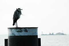 Heron resting in the wind Royalty Free Stock Photo