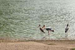 Heron on river Royalty Free Stock Image