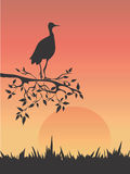 Heron in savanna Stock Photo