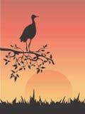 Heron in savanna. Vector illustration with bird on the tree branch Stock Photo