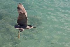 Heron at sea Royalty Free Stock Photos