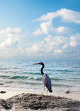 Heron and sea sunrise Royalty Free Stock Photography