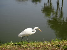 Heron on the shore of a lake Stock Images