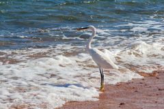 Heron on the shore of the sea Stock Photography