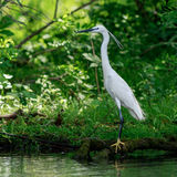 Heron on shoreline Royalty Free Stock Photography