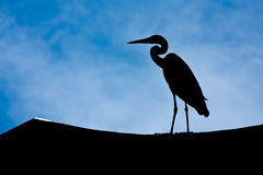 Heron in Silhouette Royalty Free Stock Photo