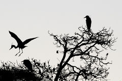 A heron silhouette in black and white Royalty Free Stock Images