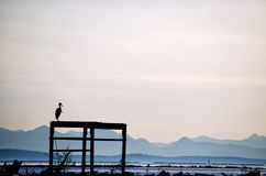 Heron Silhouette at dusk. A silhouette shot of a Heron sitting on a fence at dusk Royalty Free Stock Images