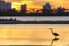 Heron Silhouette and Perdido Key. A Great Blue Heron silhouetted by golden sunset waters against Perdido Key, Florida Royalty Free Stock Photo