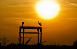 Heron Silhouettes. Silhouette shot of a two Herons watching the sun set Stock Photography