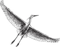 Heron in the sky. Vector drawing of a heron flying high in the sky Stock Photography